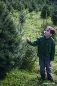 Christmas Tree Farm 006