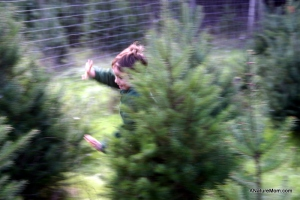 Christmas Tree Farm 009