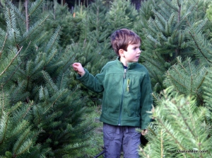 Christmas Tree Farm 019