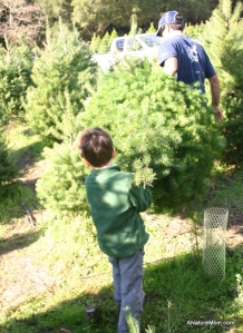 Christmas Tree Farm 036