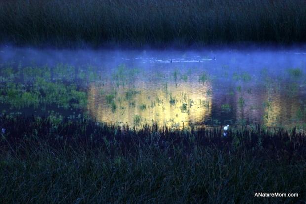 Lake Chabot 047