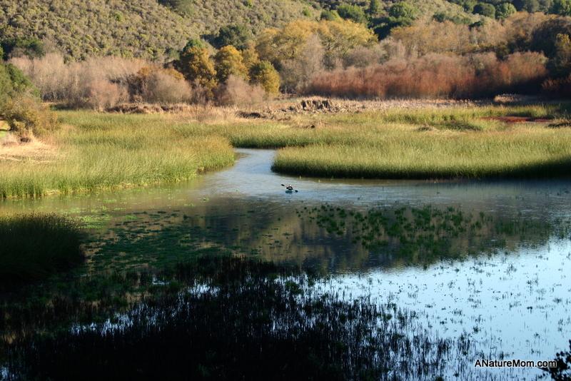 Lake Chabot 053