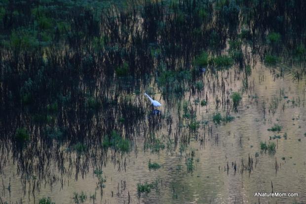 Lake Chabot 061