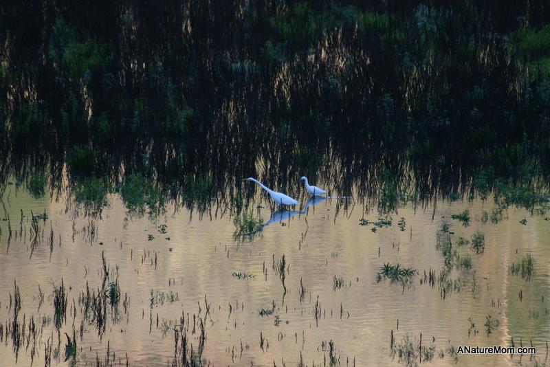 Lake Chabot 069