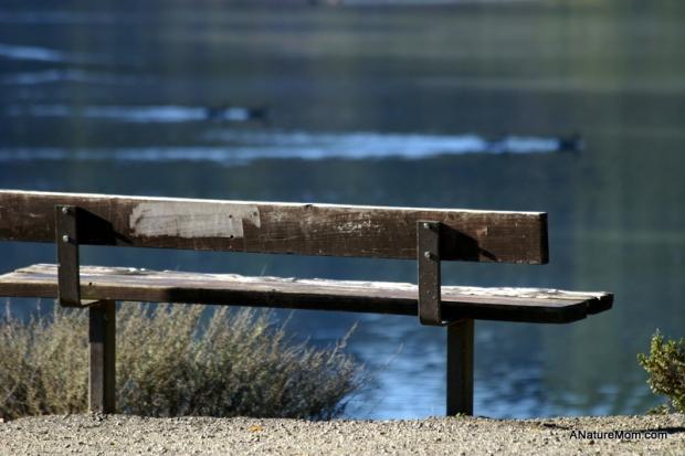 Lake Chabot 093