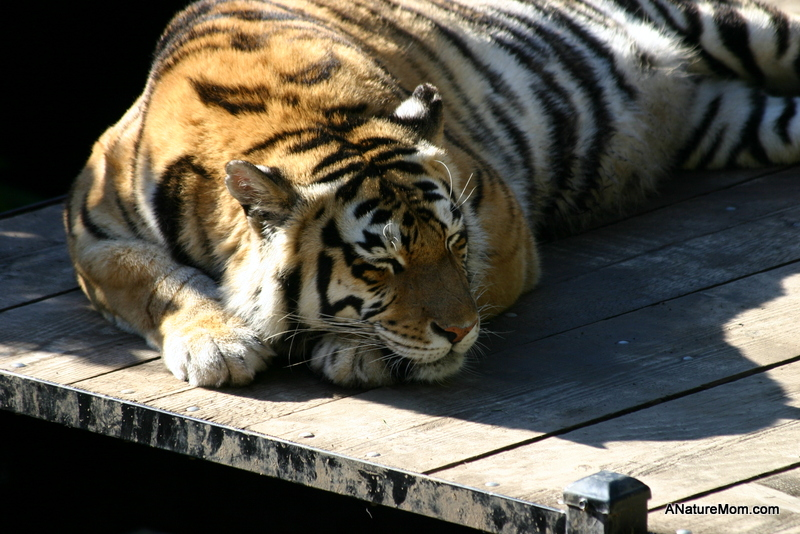Oakland Zoo 040-001