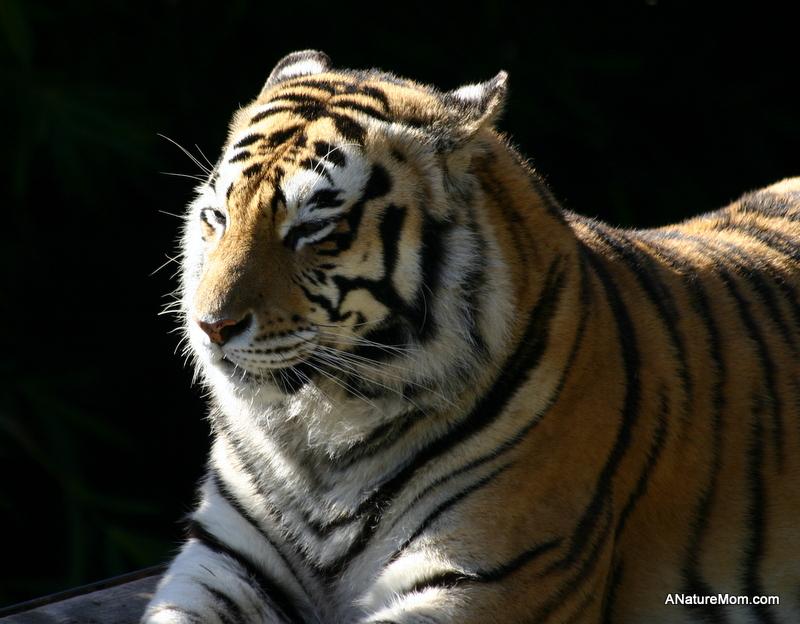 Oakland Zoo 045