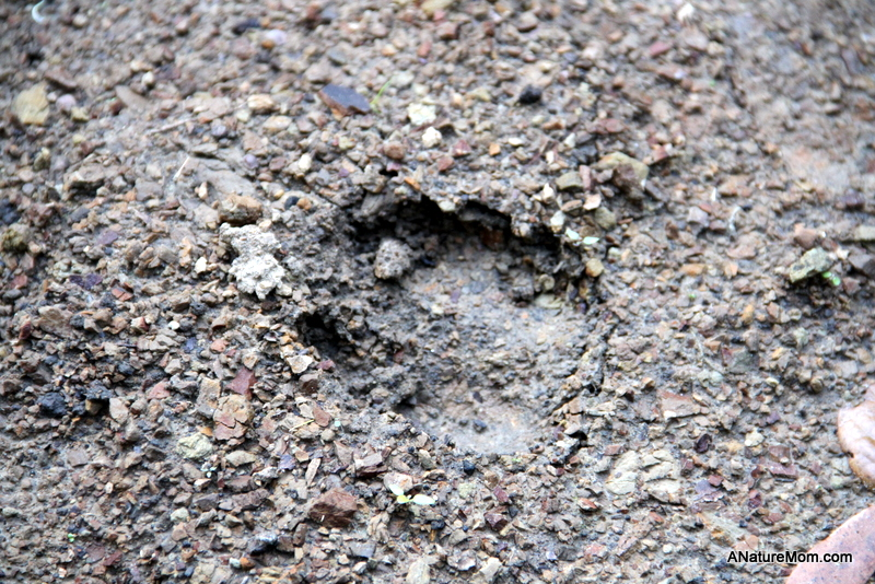 Animal Footprint Walk 001