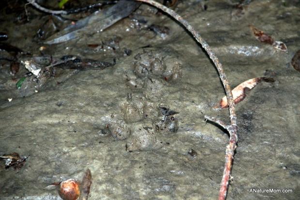 Animal Footprint Walk 012