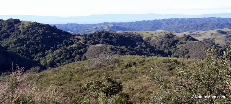 Las Trampas Coyote Hills 015