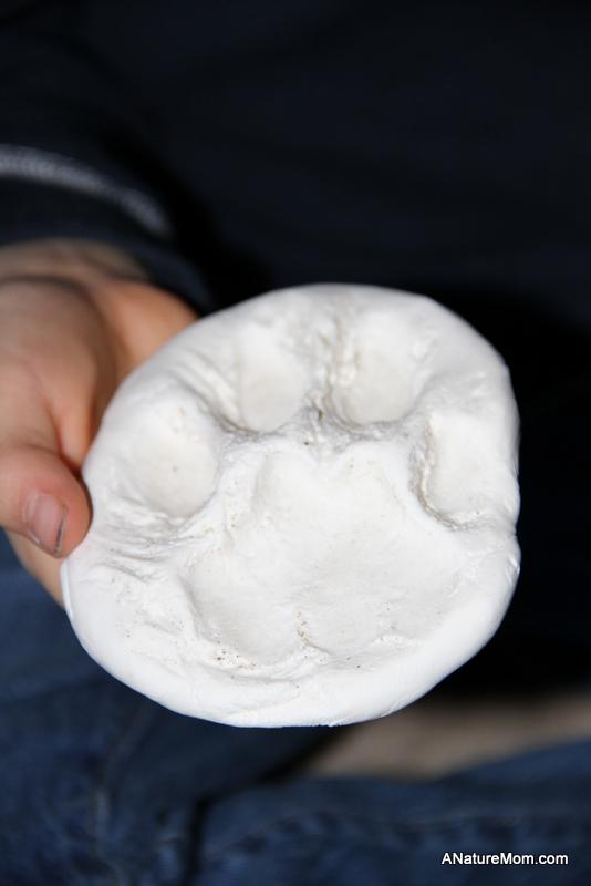 Mountain Lion Print Replica 002