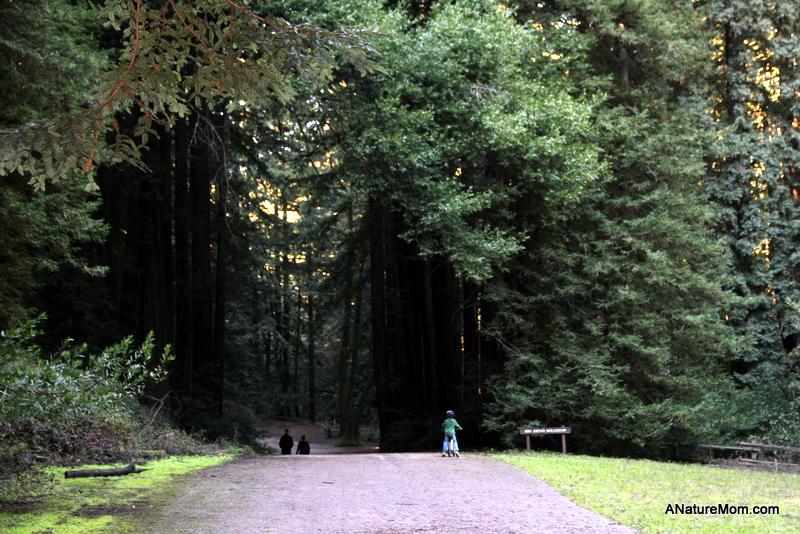 Redwood Regional 009