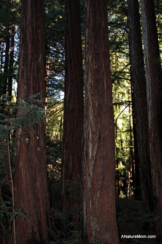 Redwood Regional 010