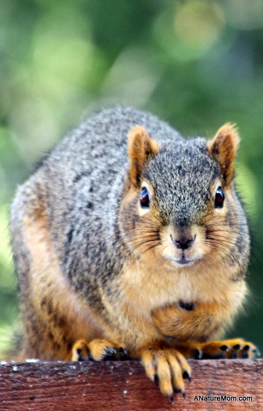 Squirrel 010