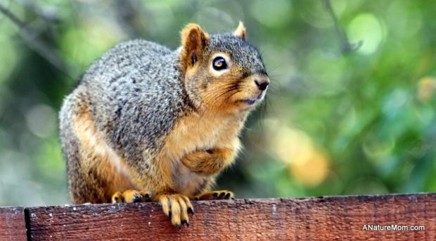 Squirrel 011