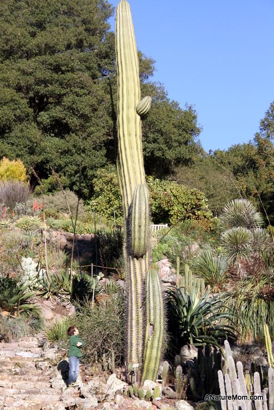 UC Berkeley Botanic Gardens 111