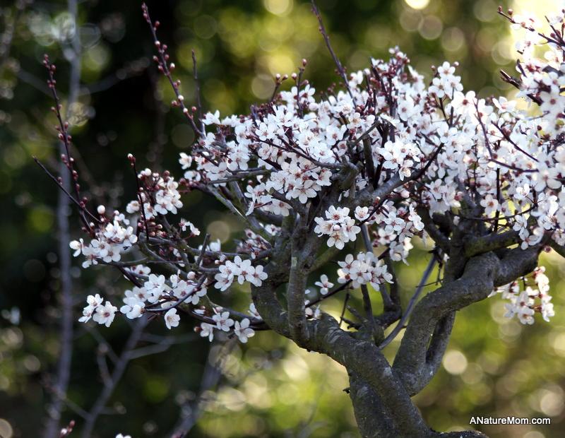 Hayward Japanese Gardens 011