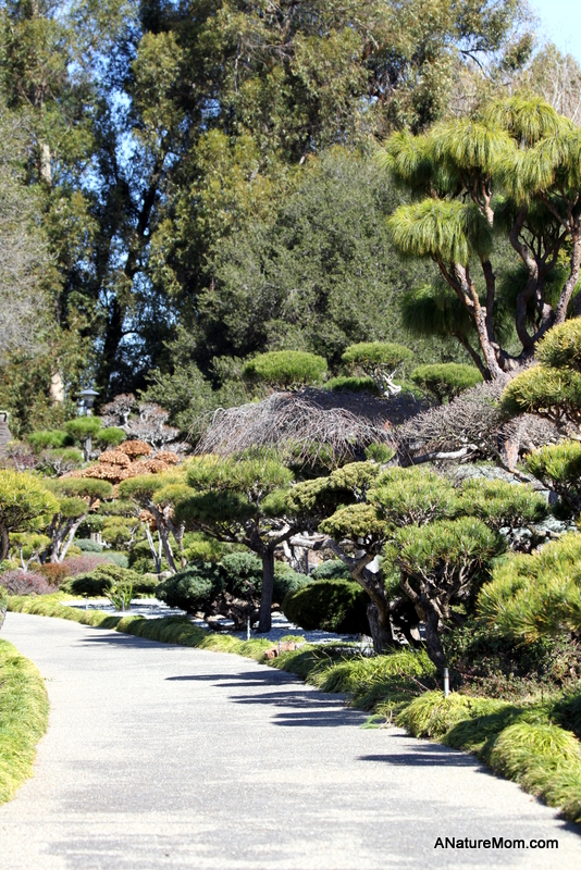 Hayward Japanese Gardens 036