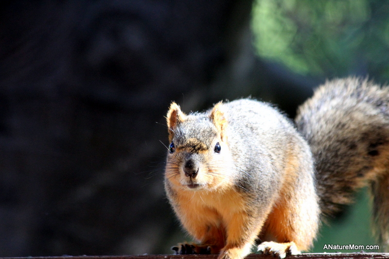 Squirrel 004