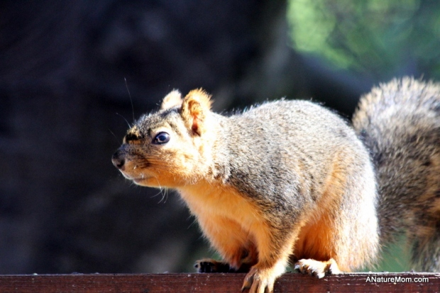 Squirrel 007