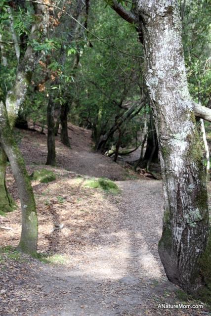 Las Trampas Hike 001