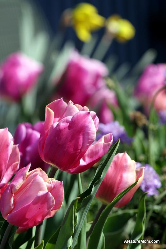 School Flowers 001