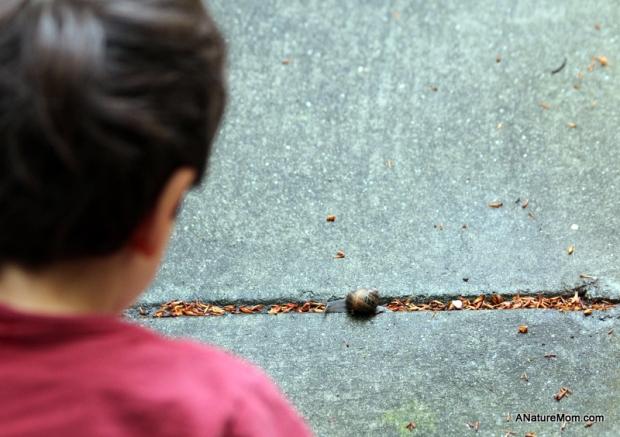 Snail 004