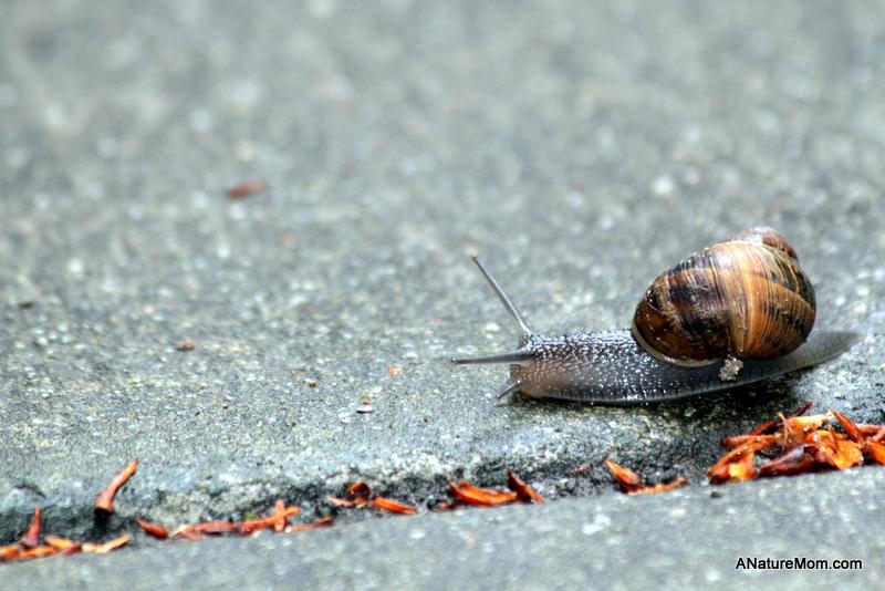 Snail 009