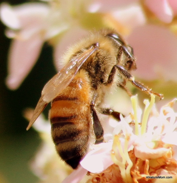 Bees 011-001