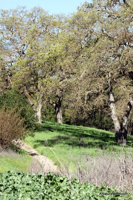 Martin Canyon Creek 020