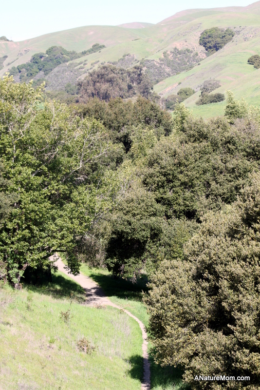 Martin Canyon Creek 061