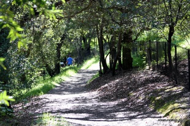 Martin Canyon Creek 091
