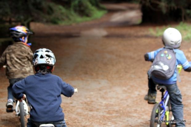 Redwood Bike Ride 009