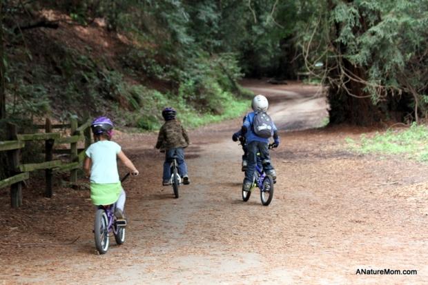 Redwood Bike Ride 014