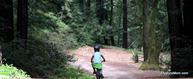 Redwood Bike Ride 024