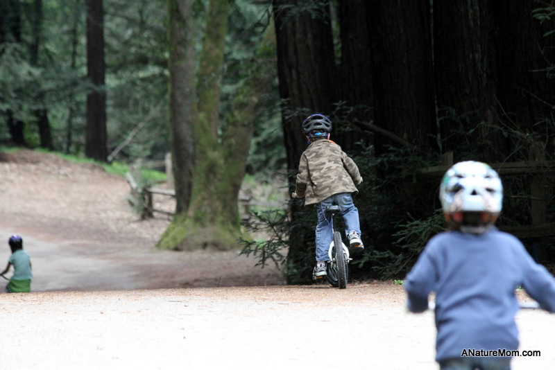 Redwood Bike Ride 028