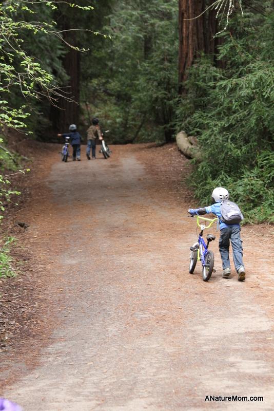 Redwood Bike Ride 030