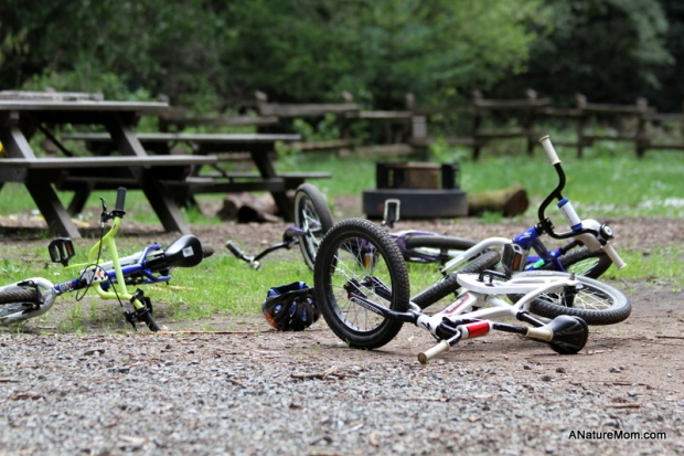 Redwood Bike Ride 034