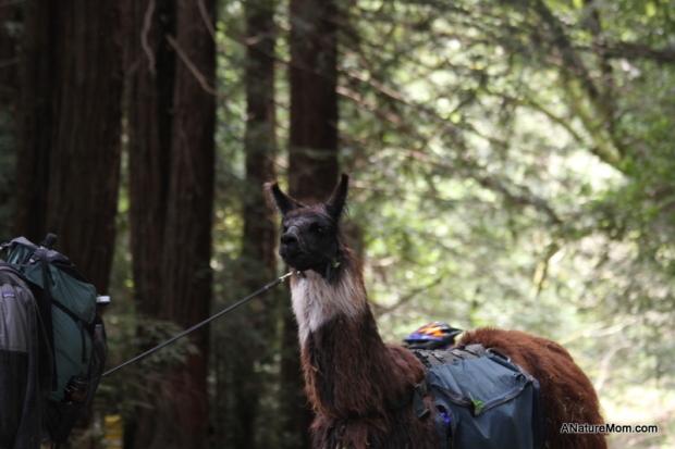Redwood Bike Ride 039