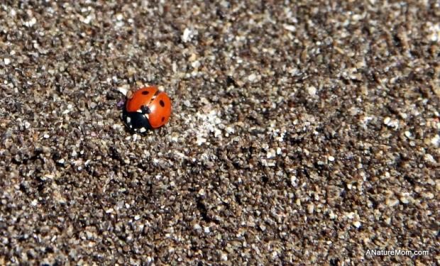 Stinson Beach Earth Day 102