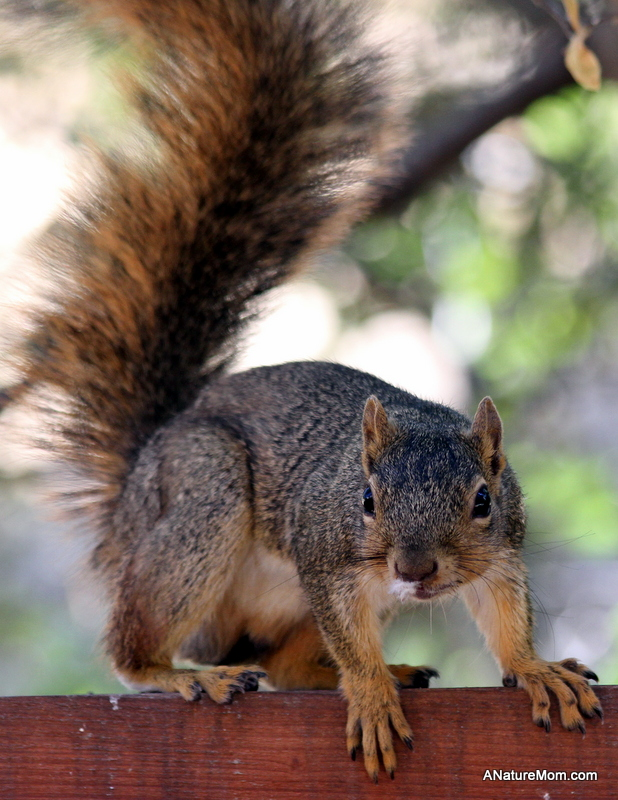 New Squirrel 002