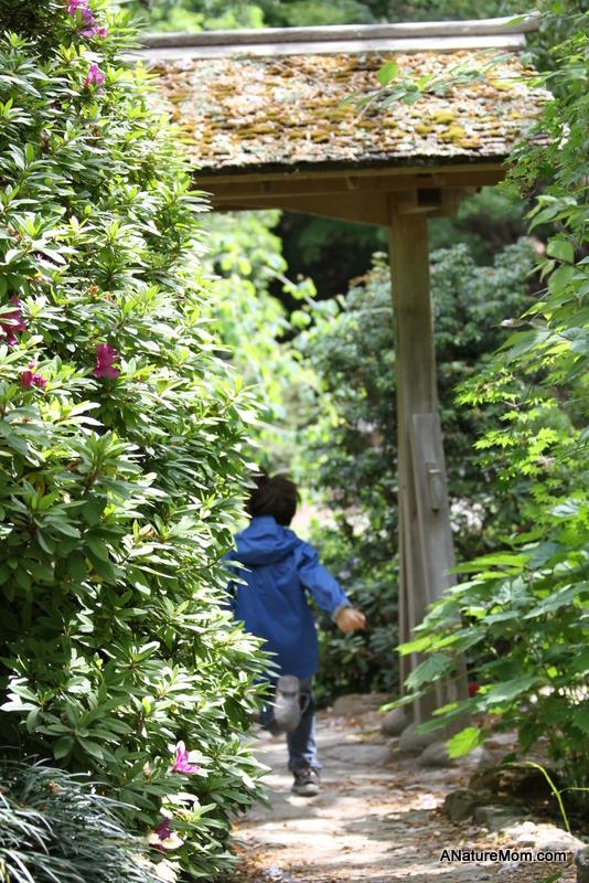 UC Berkeley Botanic Garden 015