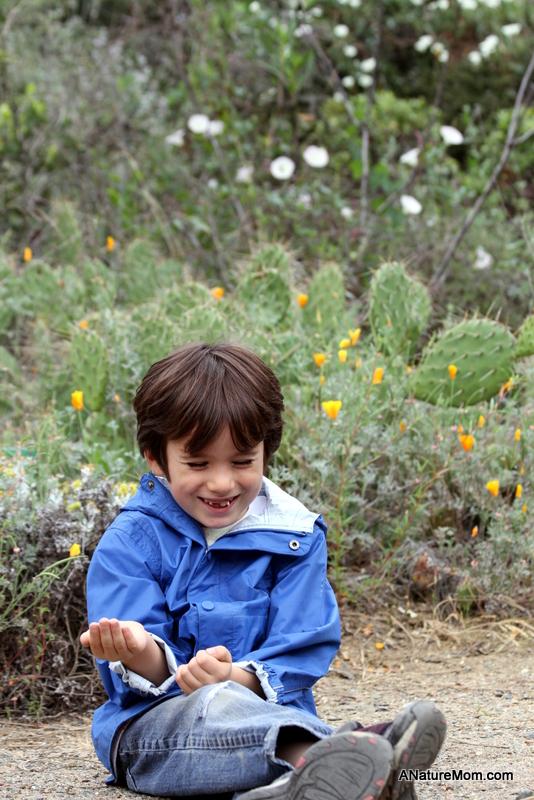 UC Berkeley Botanic Garden 079