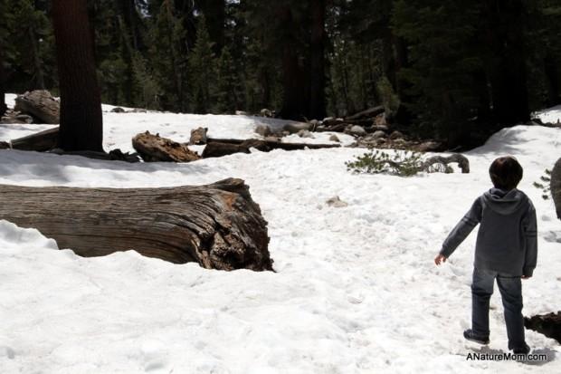 Yosemite May 2013 024