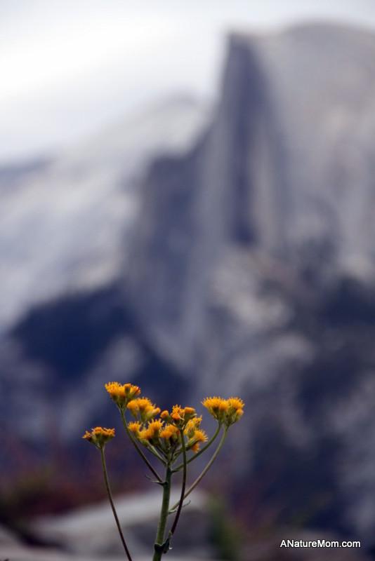 Yosemite May 2013 025