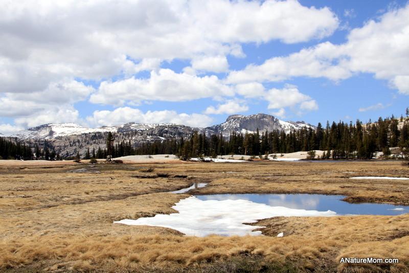 Yosemite May 2013 034