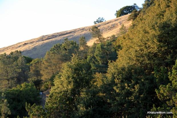 Camping Mount Diablo 044