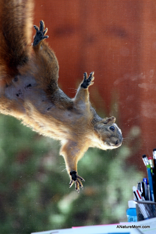Squirrel on Screen 020