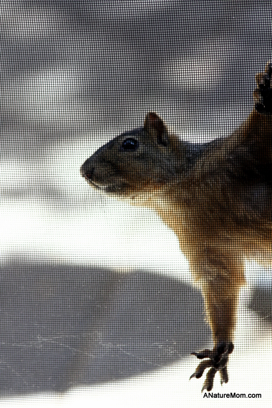 Squirrel on Screen 029