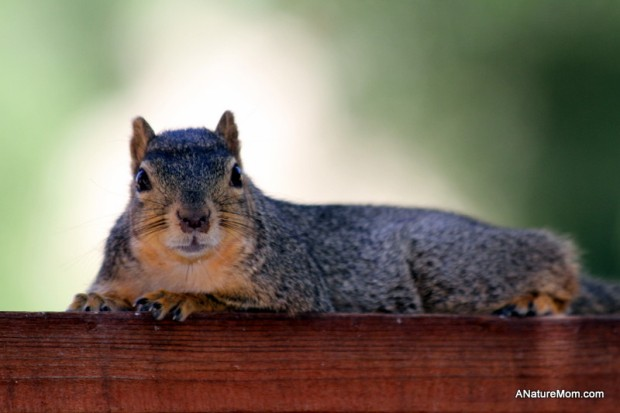 Squirrels 004